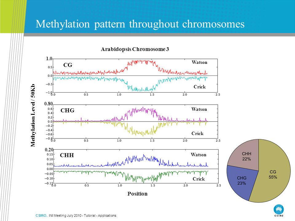 Methylation pattern throughout chromosomes