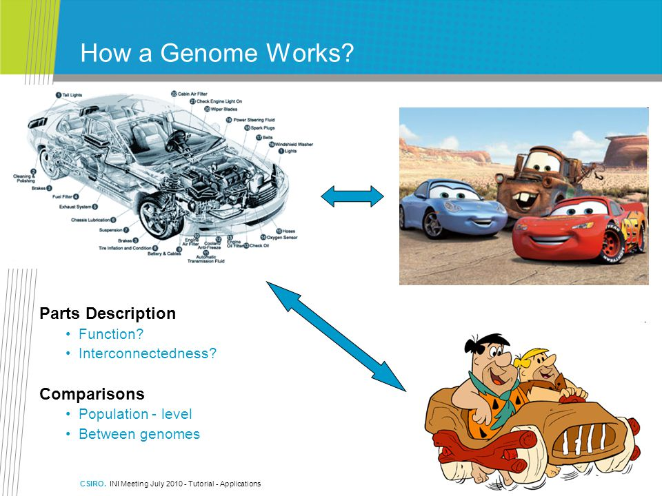 How a Genome Works Parts Description Comparisons Function