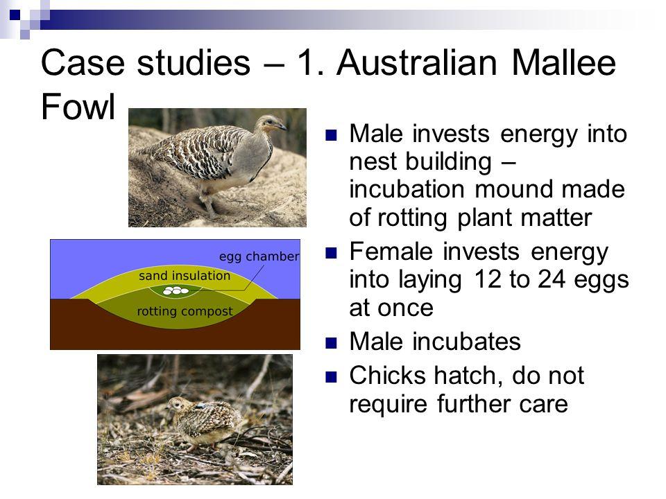 Case studies – 1. Australian Mallee Fowl