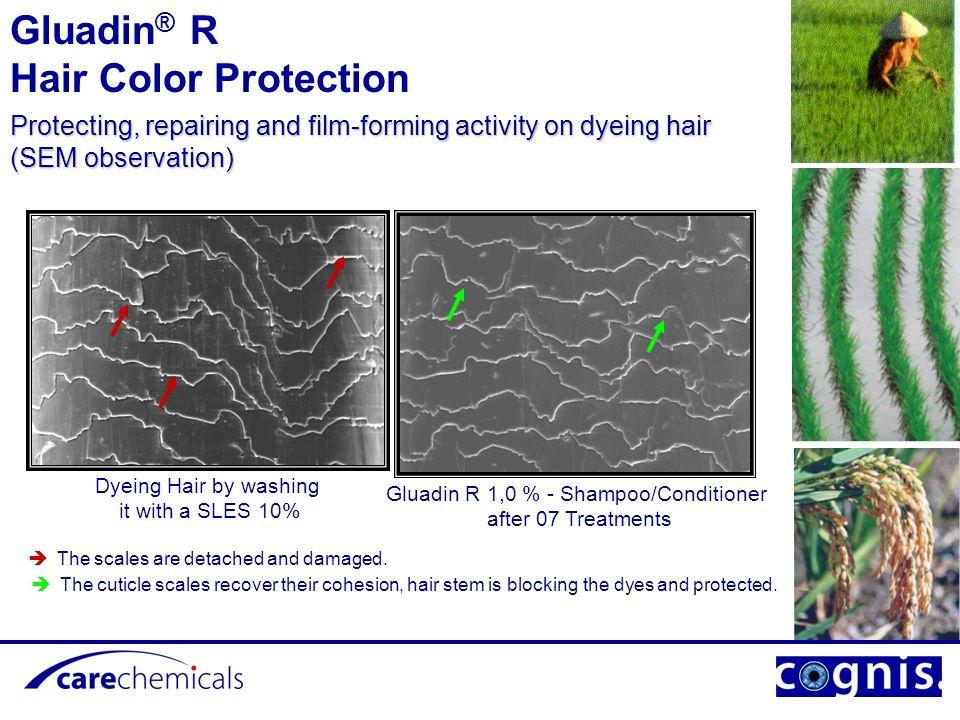 Gluadin® R Hair Color Protection