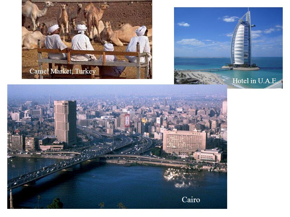 Camel Market, Turkey Hotel in U.A.E. Cairo