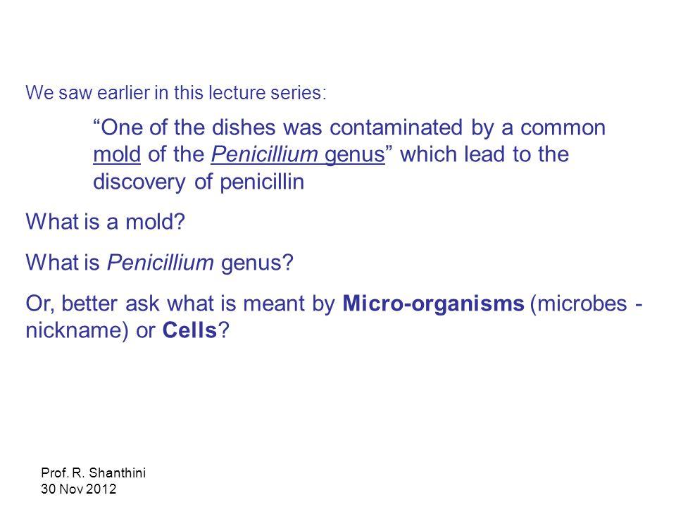 What is Penicillium genus