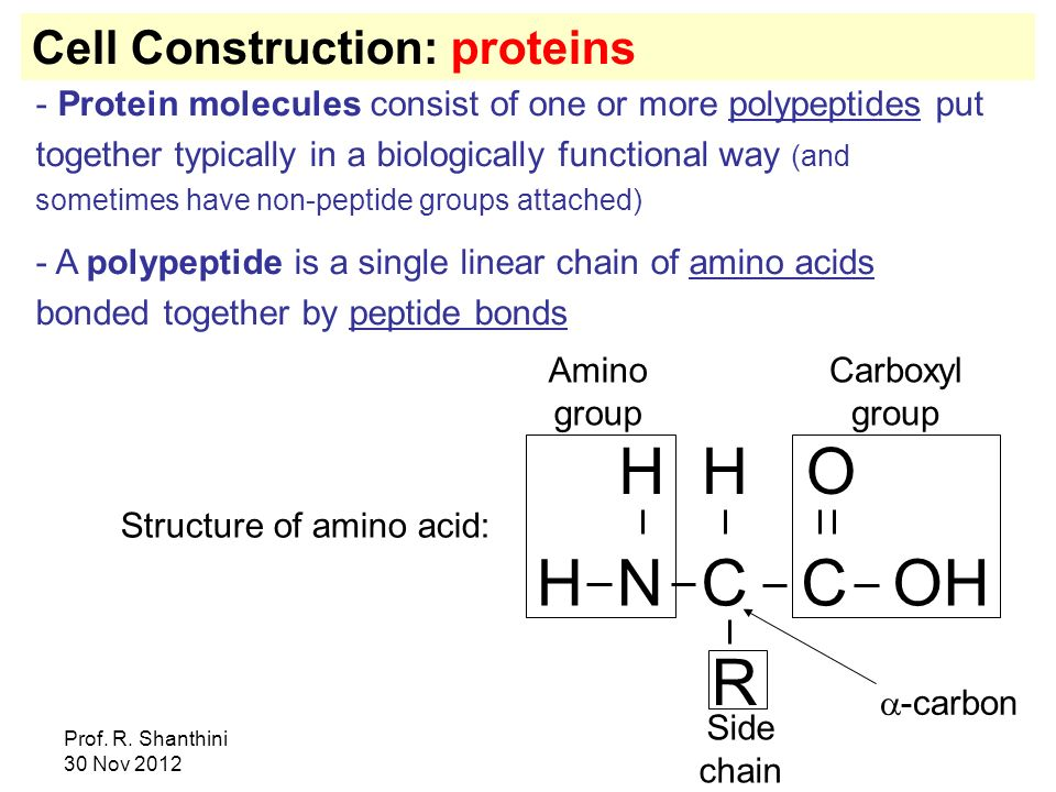H N C O R OH Cell Construction: proteins