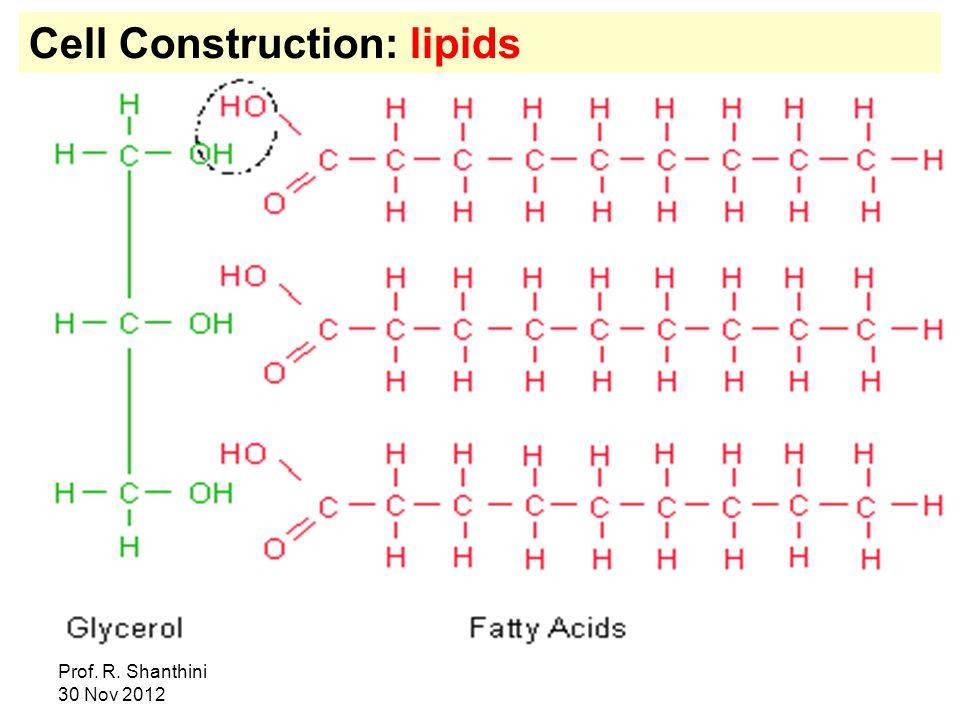 Cell Construction: lipids