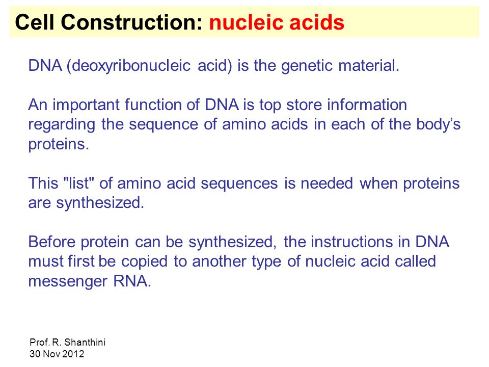 Cell Construction: nucleic acids