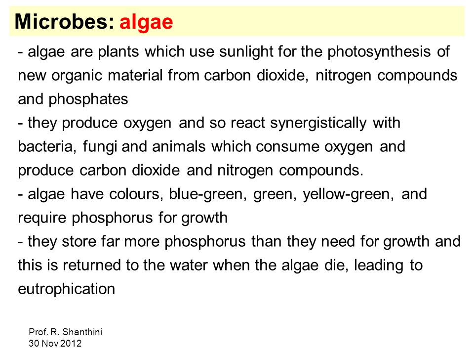 Microbes: algae
