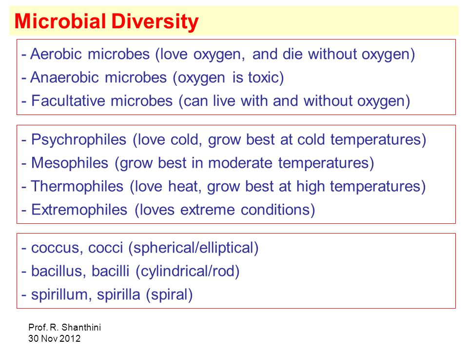 Microbial Diversity Aerobic microbes (love oxygen, and die without oxygen) Anaerobic microbes (oxygen is toxic)
