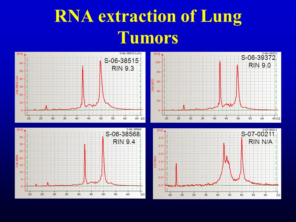 RNA extraction of Lung Tumors