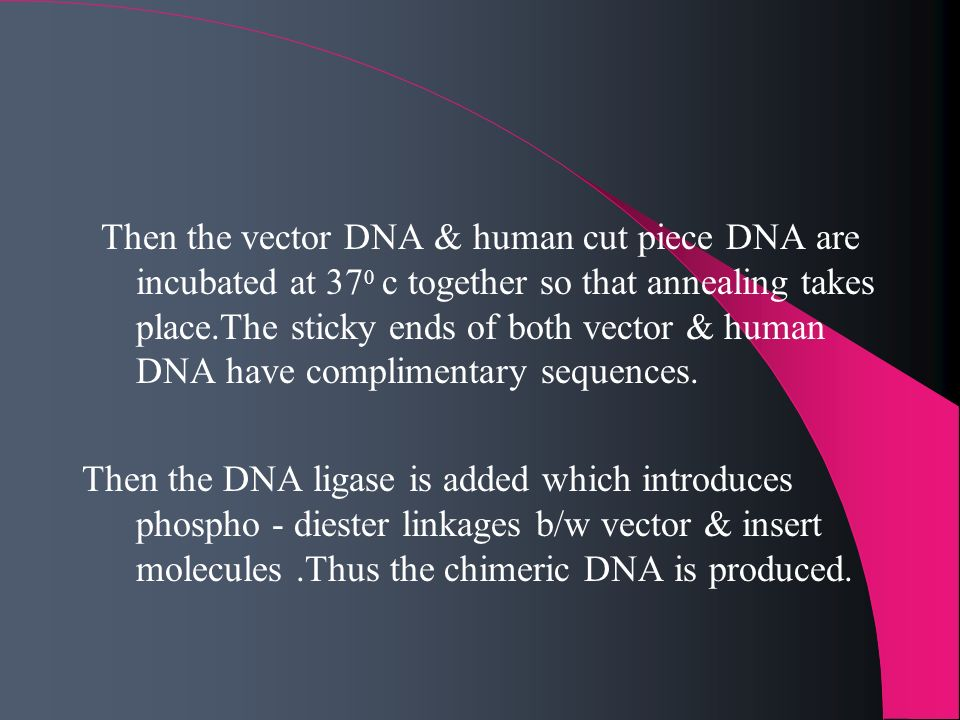 Then the vector DNA & human cut piece DNA are incubated at 370 c together so that annealing takes place.The sticky ends of both vector & human DNA have complimentary sequences.