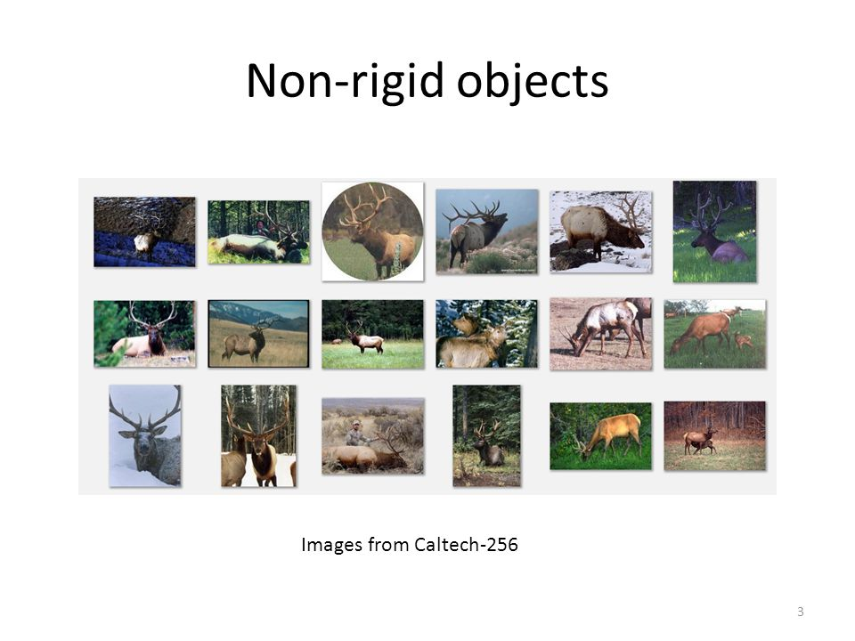 Non-rigid objects Images from Caltech-256
