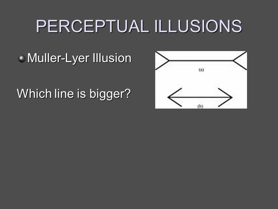 PERCEPTUAL ILLUSIONS Muller-Lyer Illusion Which line is bigger