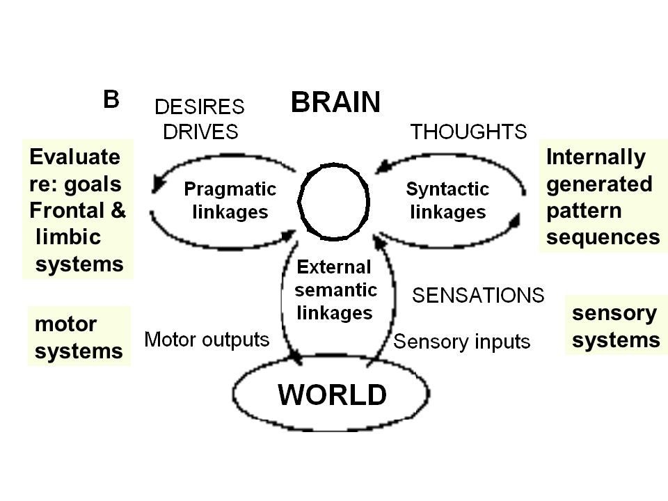 Evaluate re: goals. Frontal & limbic. systems. Internally. generated. pattern. sequences. sensory.