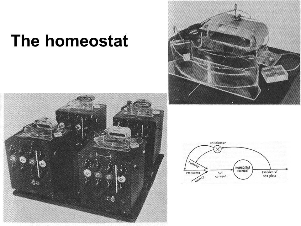 The homeostat