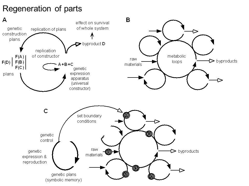Regeneration of parts