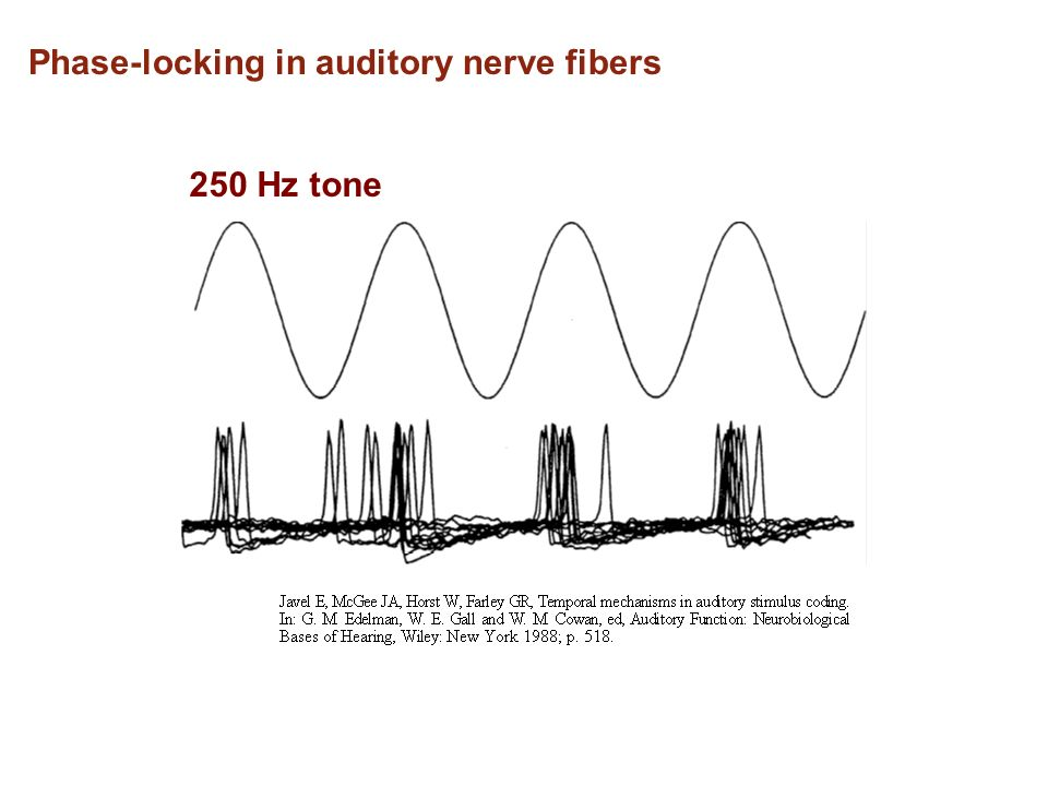 Phase-locking in auditory nerve fibers