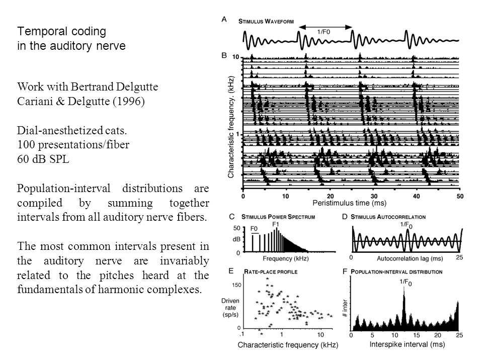 Temporal coding in the auditory nerve