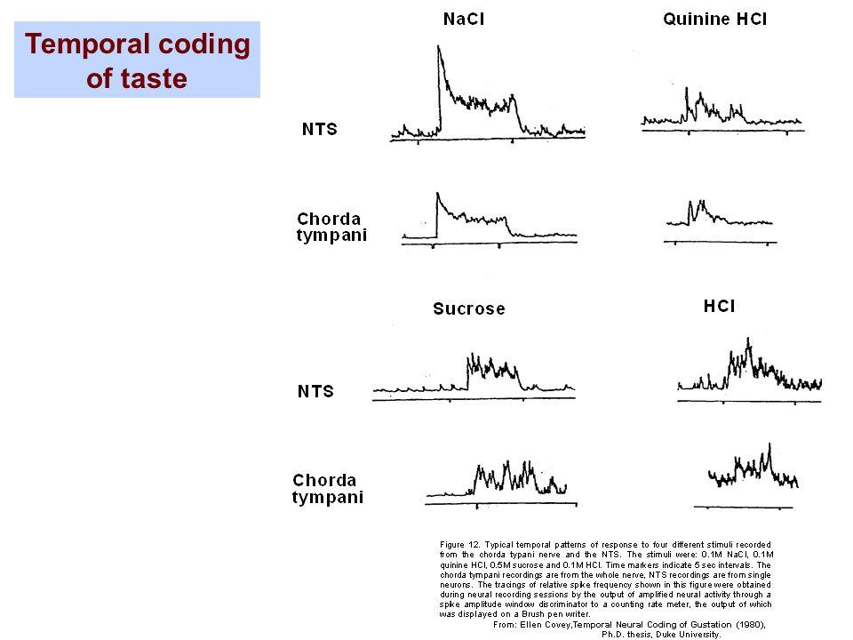 Temporal coding of taste