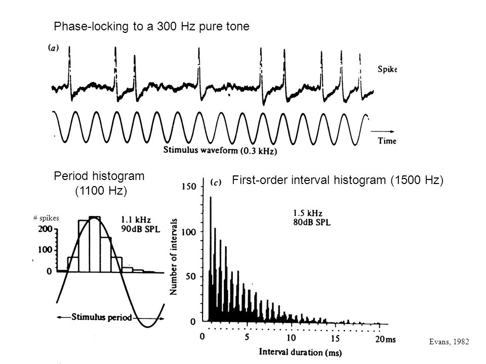 Phase-locking to a 300 Hz pure tone