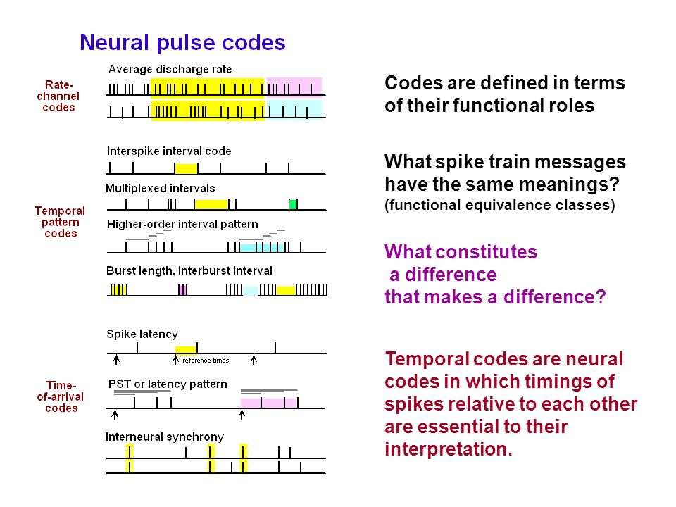 Codes are defined in terms of their functional roles