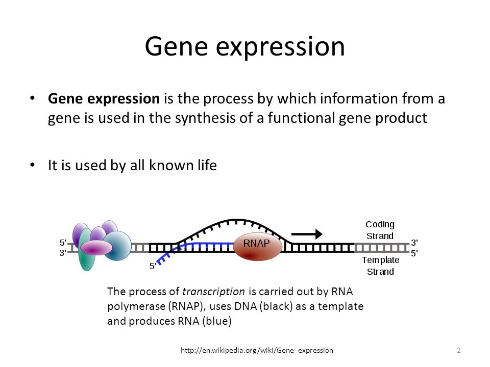 Gene expression Gene expression is the process by which information from a gene is used in the synthesis of a functional gene product.