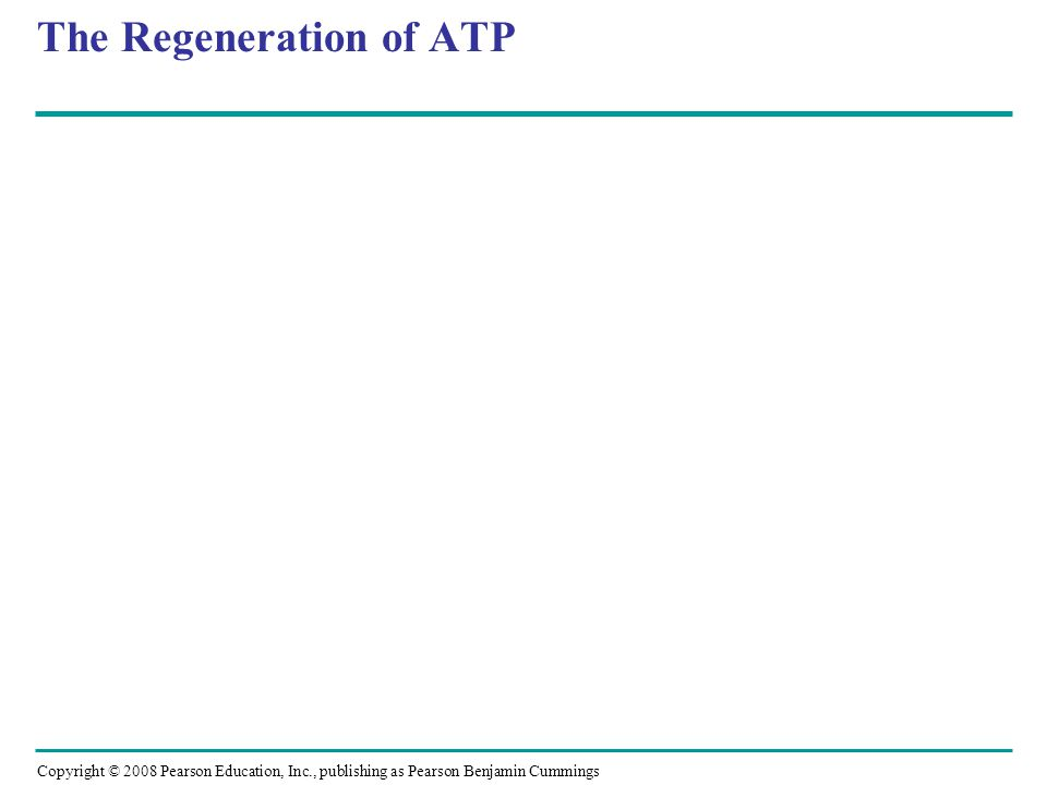 The Regeneration of ATP
