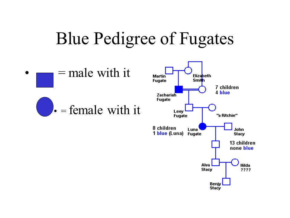Blue Pedigree of Fugates