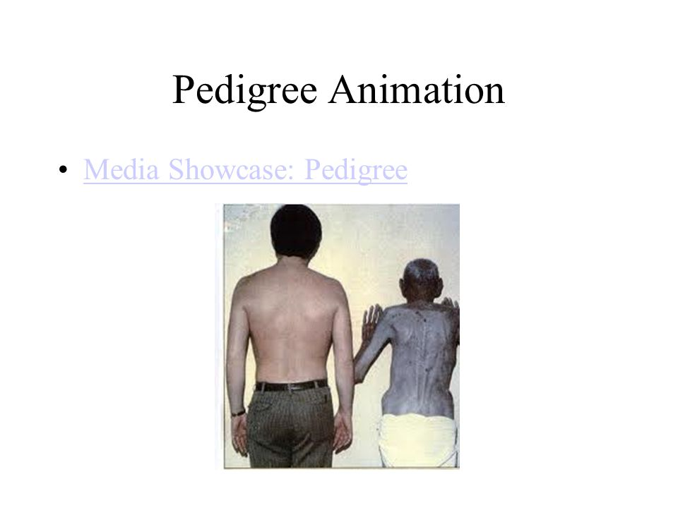Pedigree Animation Media Showcase: Pedigree