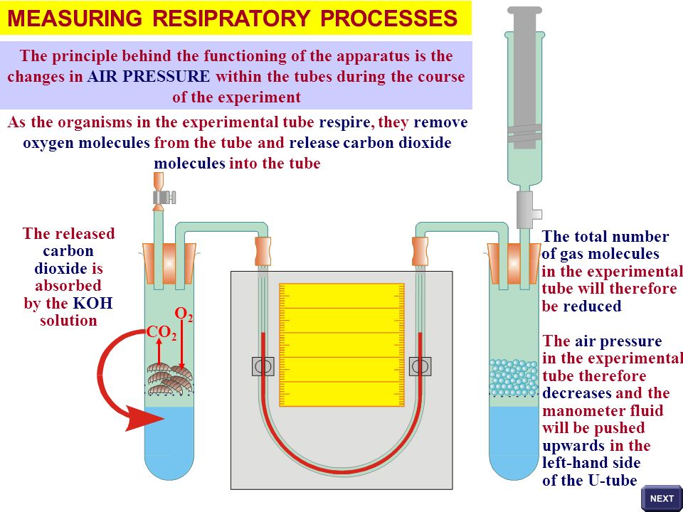 MEASURING RESIPRATORY PROCESSES