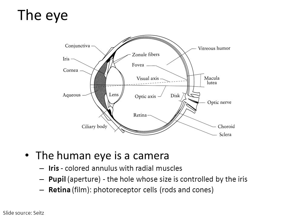 The eye The human eye is a camera