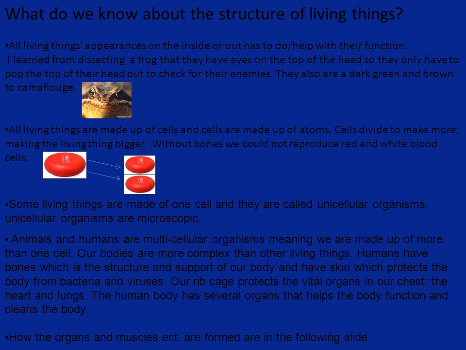 What do we know about the structure of living things