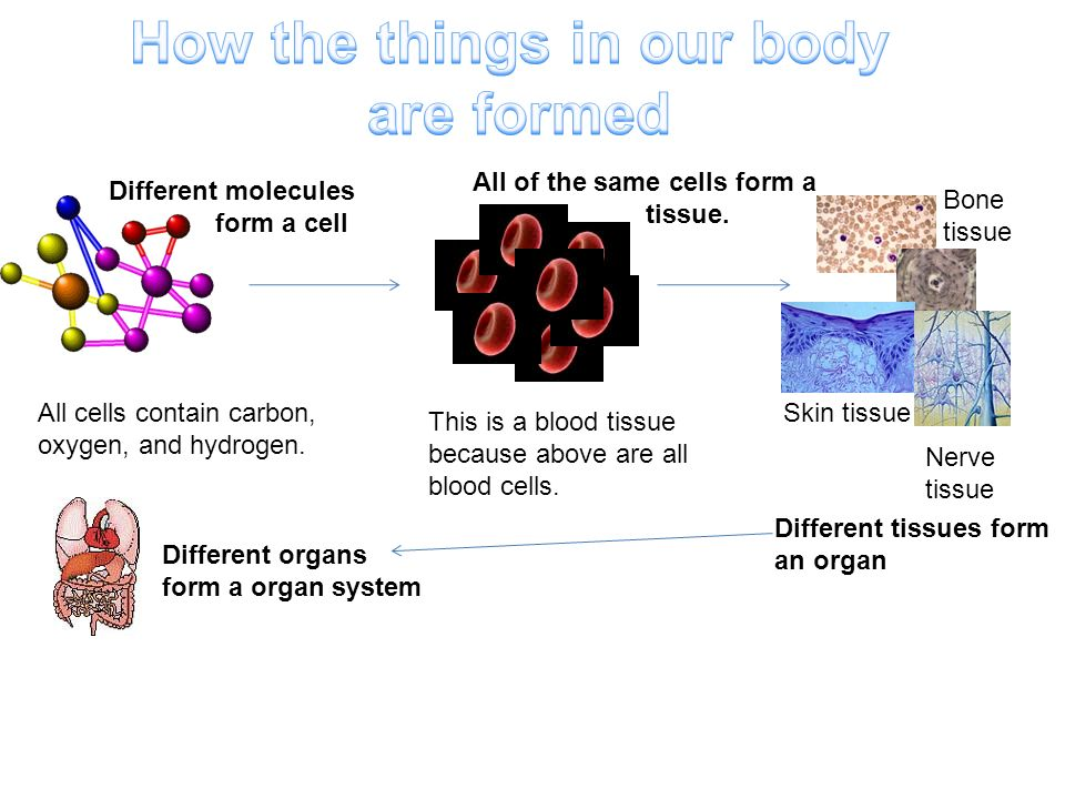 How the things in our body