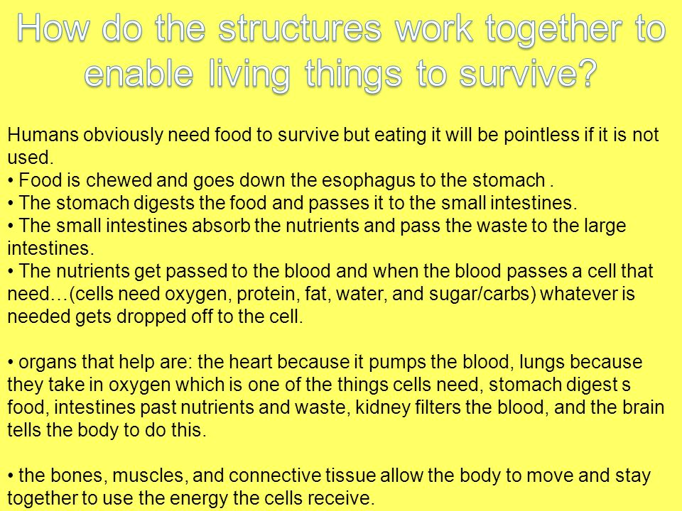How do the structures work together to enable living things to survive