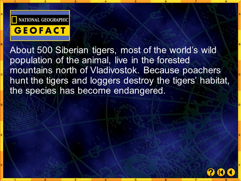 About 500 Siberian tigers, most of the world's wild population of the animal, live in the forested mountains north of Vladivostok. Because poachers hunt the tigers and loggers destroy the tigers' habitat, the species has become endangered.