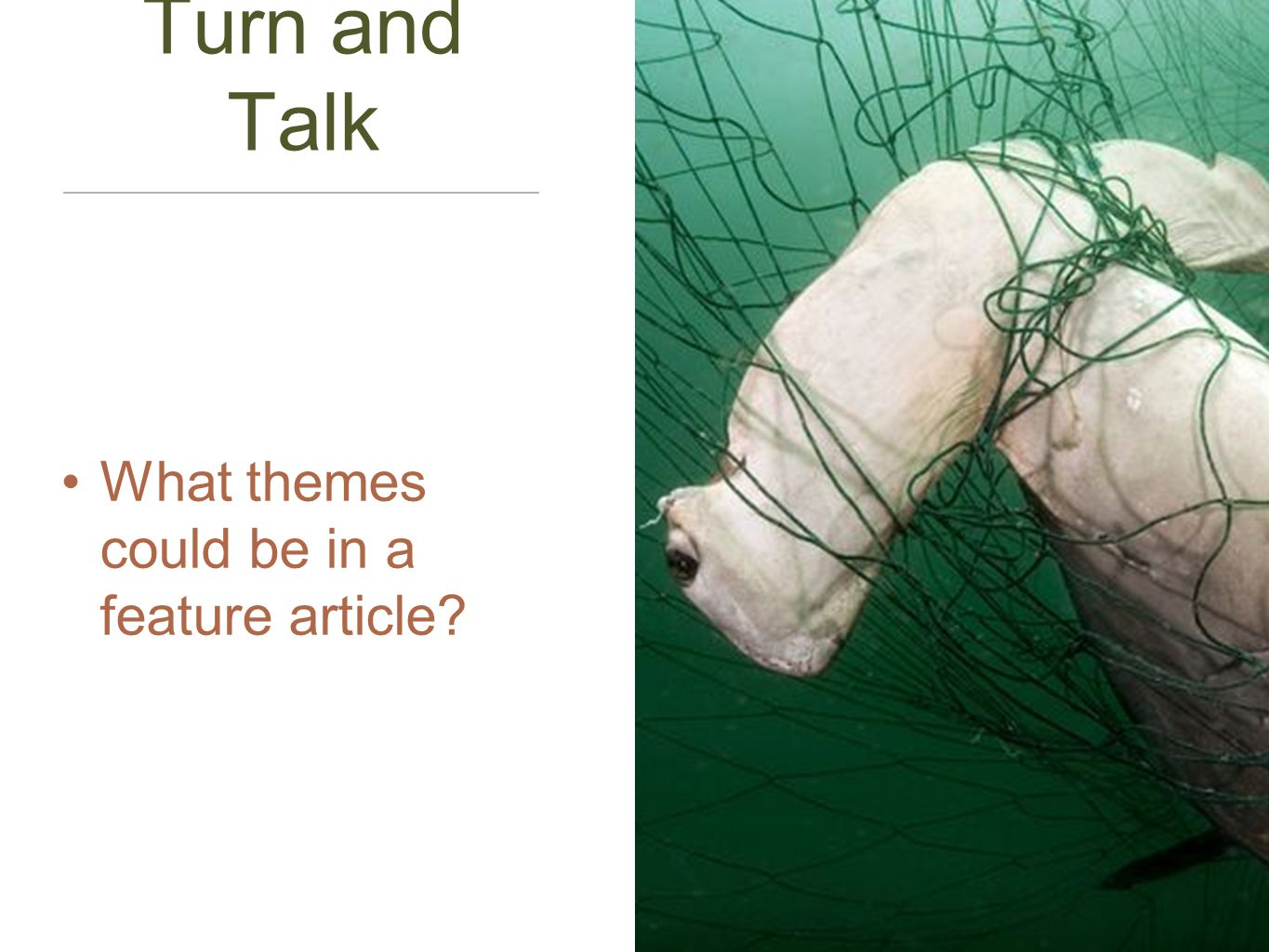 Turn and Talk What themes could be in a feature article