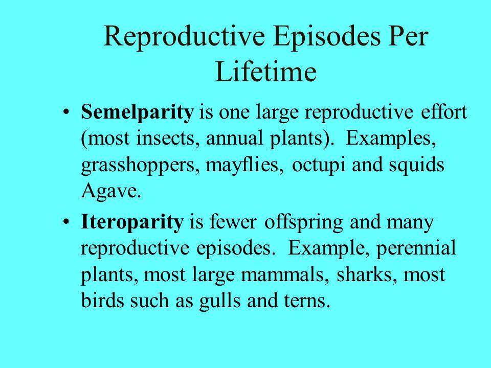 Reproductive Episodes Per Lifetime