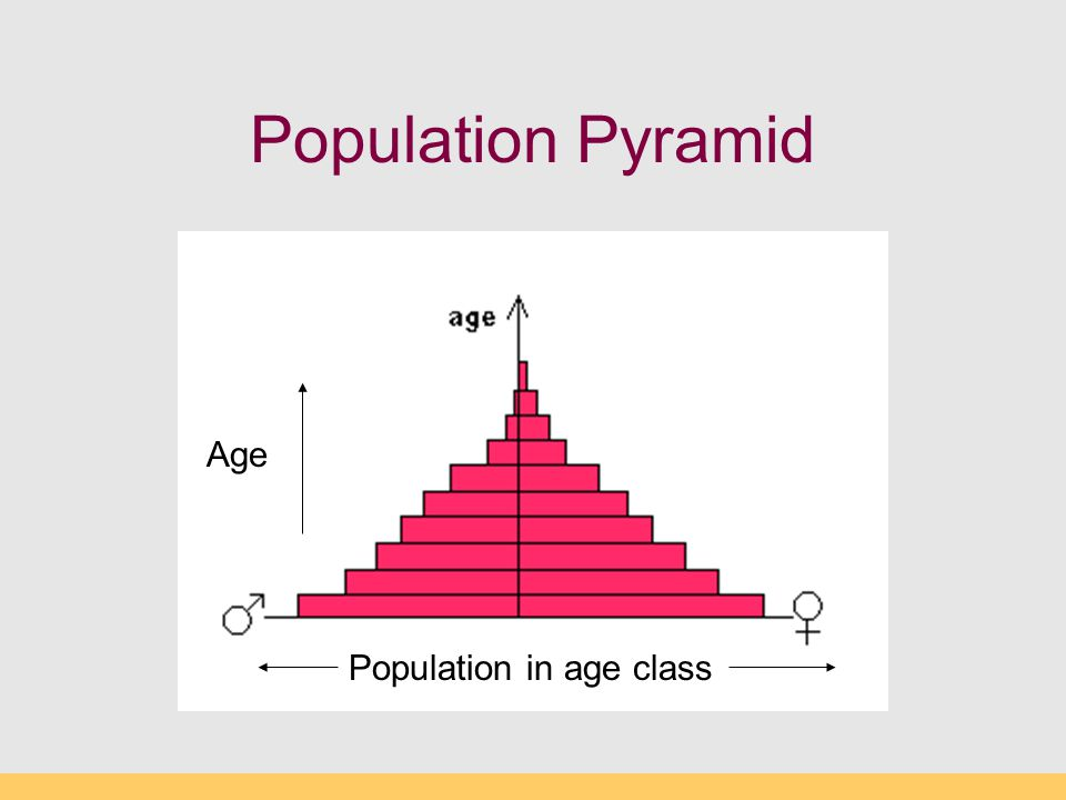 Population Pyramid Age Population in age class