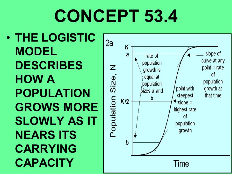 CONCEPT 53.4 THE LOGISTIC MODEL DESCRIBES HOW A POPULATION GROWS MORE SLOWLY AS IT NEARS ITS CARRYING CAPACITY.
