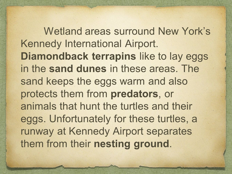 Wetland areas surround New York's Kennedy International Airport