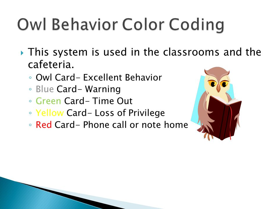 Owl Behavior Color Coding