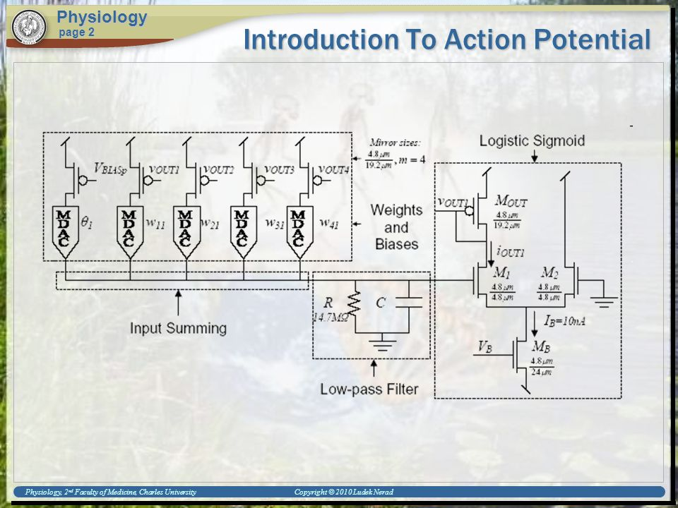 Introduction To Action Potential