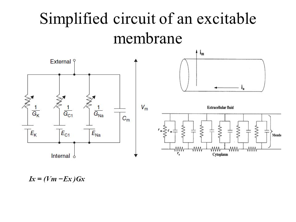 Simplified circuit of an excitable membrane