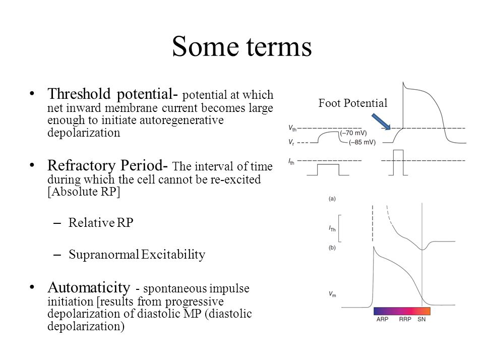 Some terms Threshold potential- potential at which net inward membrane current becomes large enough to initiate autoregenerative depolarization.