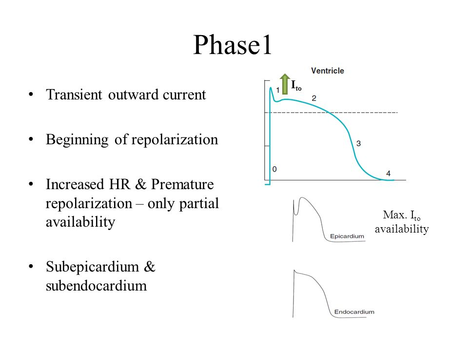 Phase1 Transient outward current Beginning of repolarization