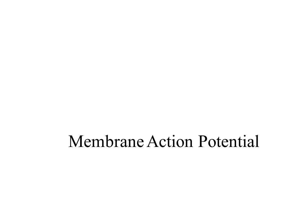 Membrane Action Potential