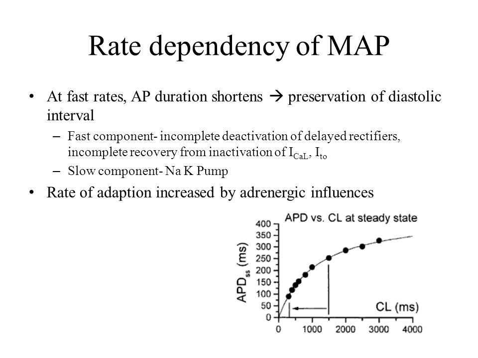 Rate dependency of MAP At fast rates, AP duration shortens  preservation of diastolic interval.