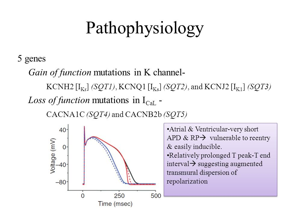 Pathophysiology 5 genes Gain of function mutations in K channel-