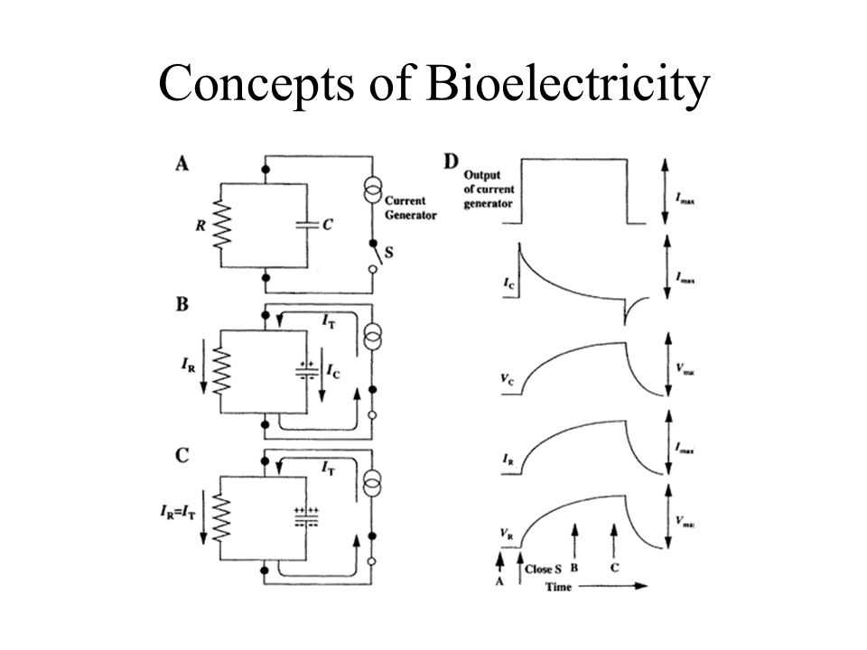 Concepts of Bioelectricity