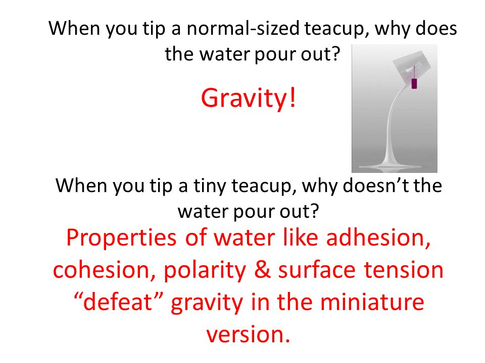 When you tip a normal-sized teacup, why does the water pour out