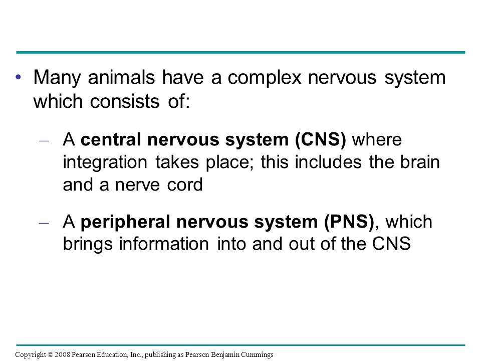 Many animals have a complex nervous system which consists of: