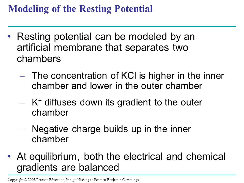 Modeling of the Resting Potential